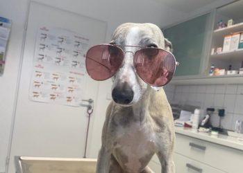 Sommer-Hitze: Tipps für Hunde zum Abkühlen